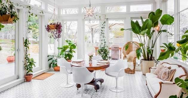 17 loại cây lọc không khí hiệu quả nên trồng trong nhà