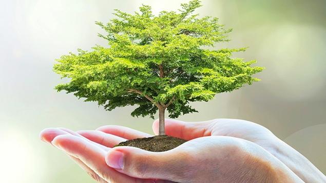 7 cách bảo vệ môi trường sống mà mỗi người chúng ta cần phải biết