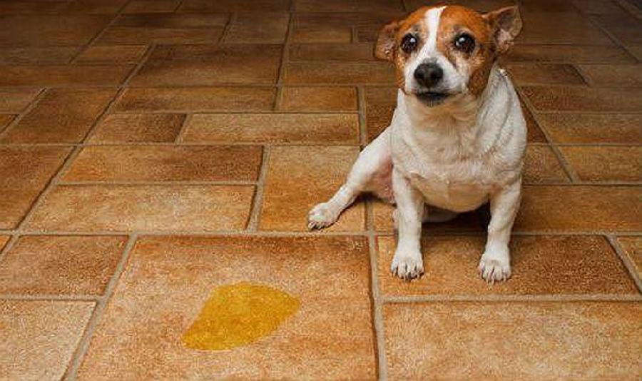 Cách khử mùi hôi khủng khiếp từ vật nuôi không phải ai cũng biết