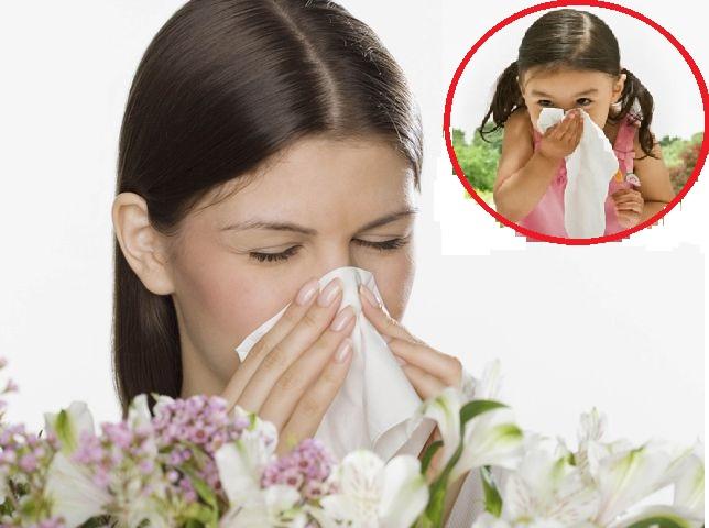 Điều gì xảy ra khi phấn hoa lọt vào mũi bạn?