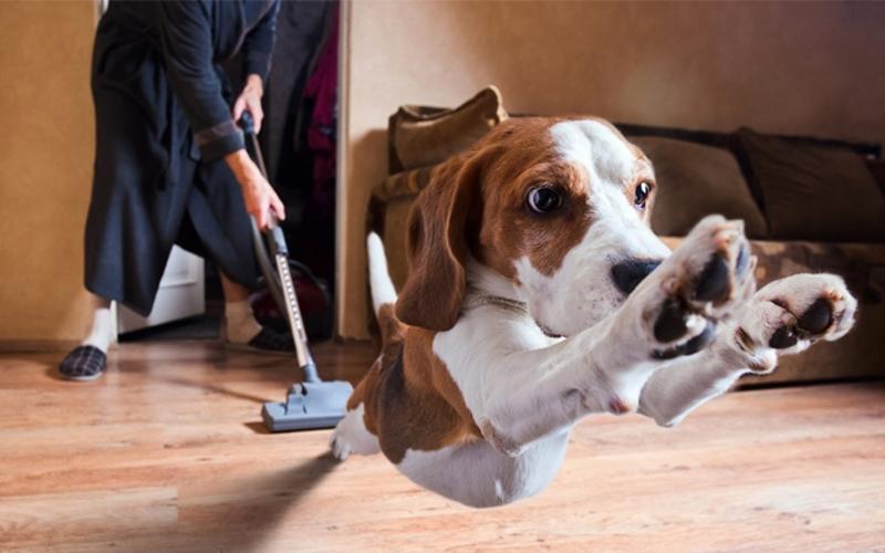 Hãy học cách dọn vệ sinh nhà để khử mùi hôi vật nuôi trong nhà bạn
