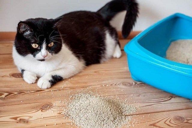 Khử mùi chó mèo trong nhà vì sức khỏe gia đình