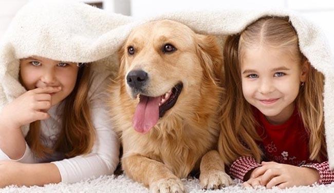 Khử mùi hôi trong nhà đơn giản khi nuôi động vật