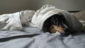 Khử mùi hôi trong nhà khi nuôi động vật rất đơn giản