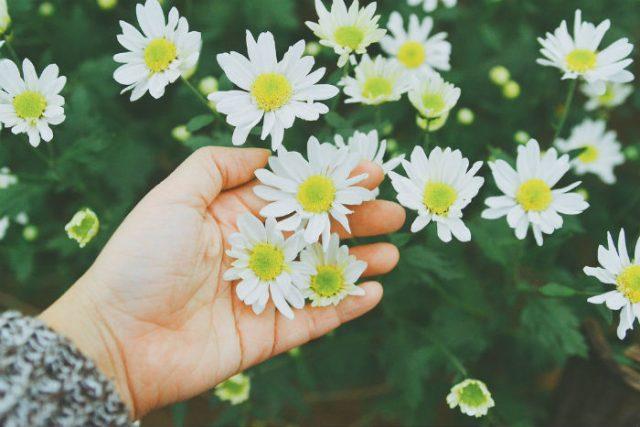 Mỗi loài hoa đều có chứa hương thơm, nhưng không phải tất cả