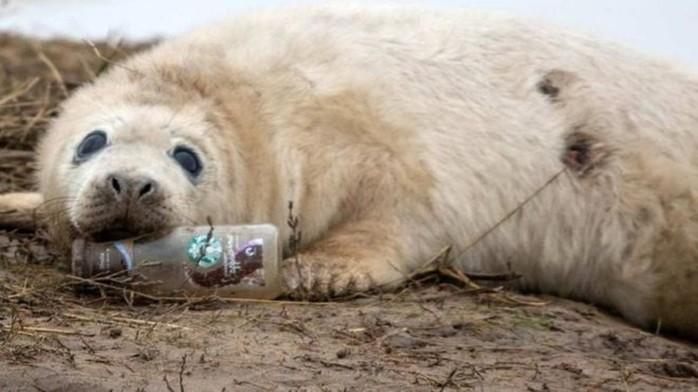 Nhiều loài động vật thậm chí đã chọn ăn nhựa