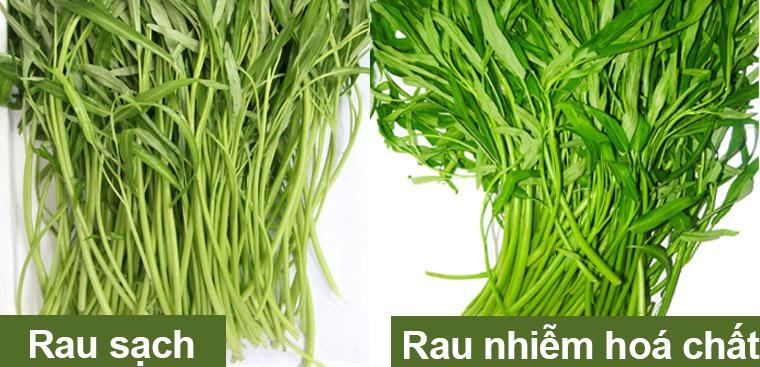 Những mẹo nhận biết các loại rau có chứa hóa chất