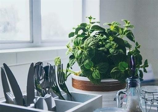 Tuyệt chiêu siêu hay ho đánh bật mùi hôi trong nhà bếp